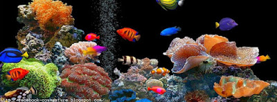 Belle photo de Couverture Facebook Aquarium