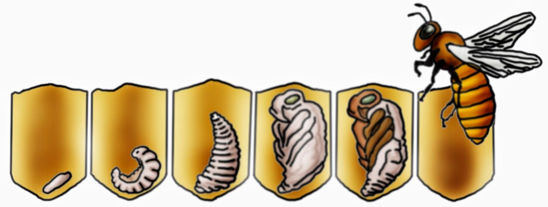 Arbeitsblatt Bienen Grundschule : Krabbelwiese im ruhemodus weitere bilder zur