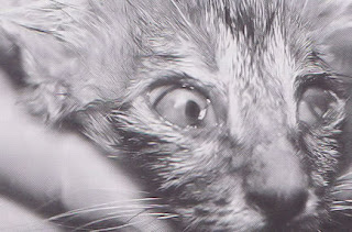 Diario di una biologa malattie del gatto infezione - Che malattie portano i gatti ...