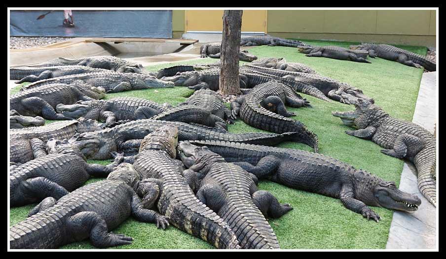 Enjoy The Journey Reptile Gardens