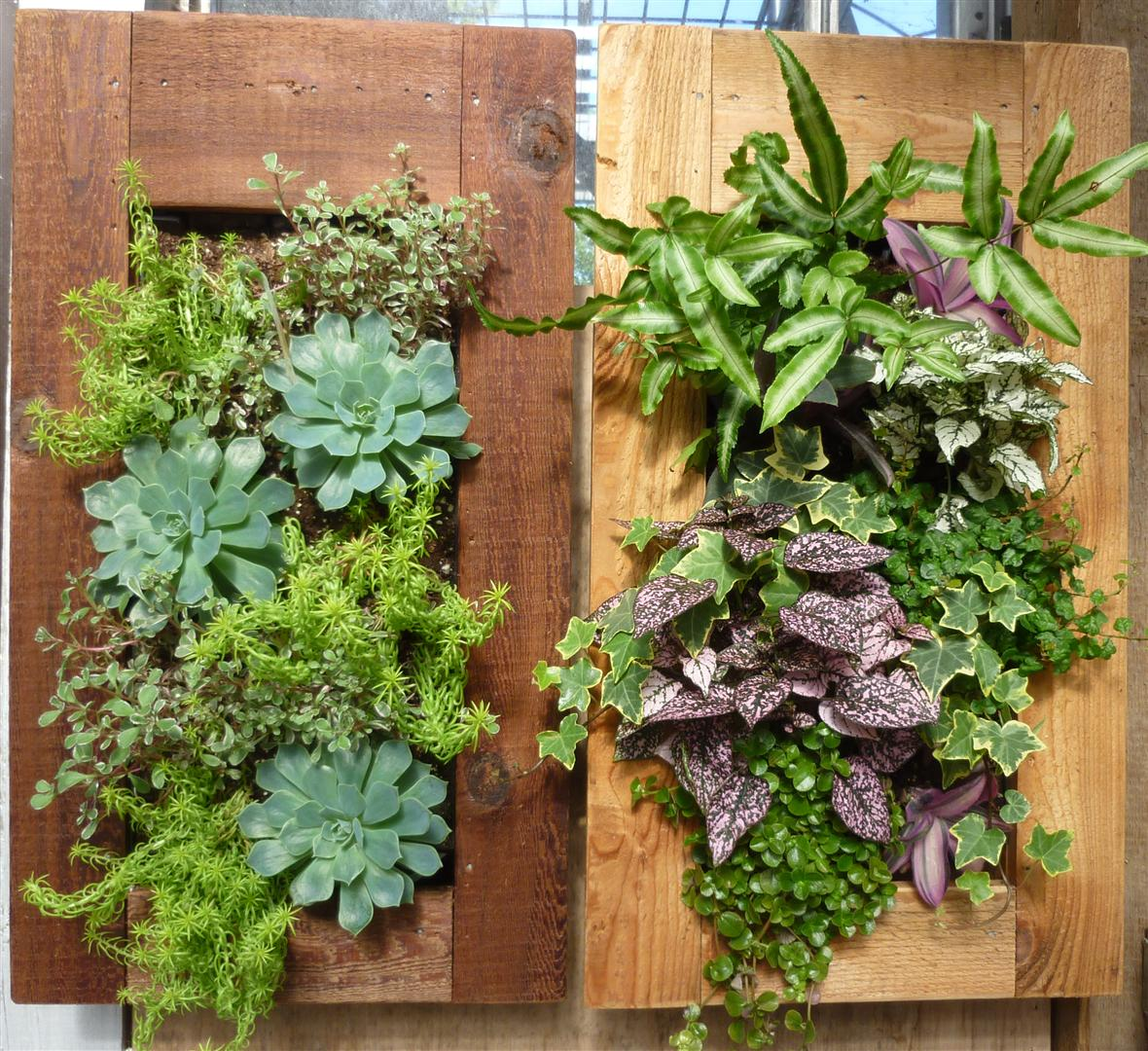 Living Wall Planter Elegance Dream Home Design