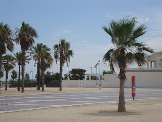 Beautiful palm tres in a square photo - Cabanyal Beach - Valencia - Spain