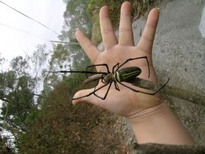 Angola Witch Spider http://www.shessoflyoutdoornews.com/2013/03/the-real-story-behind-angolan-witch.html