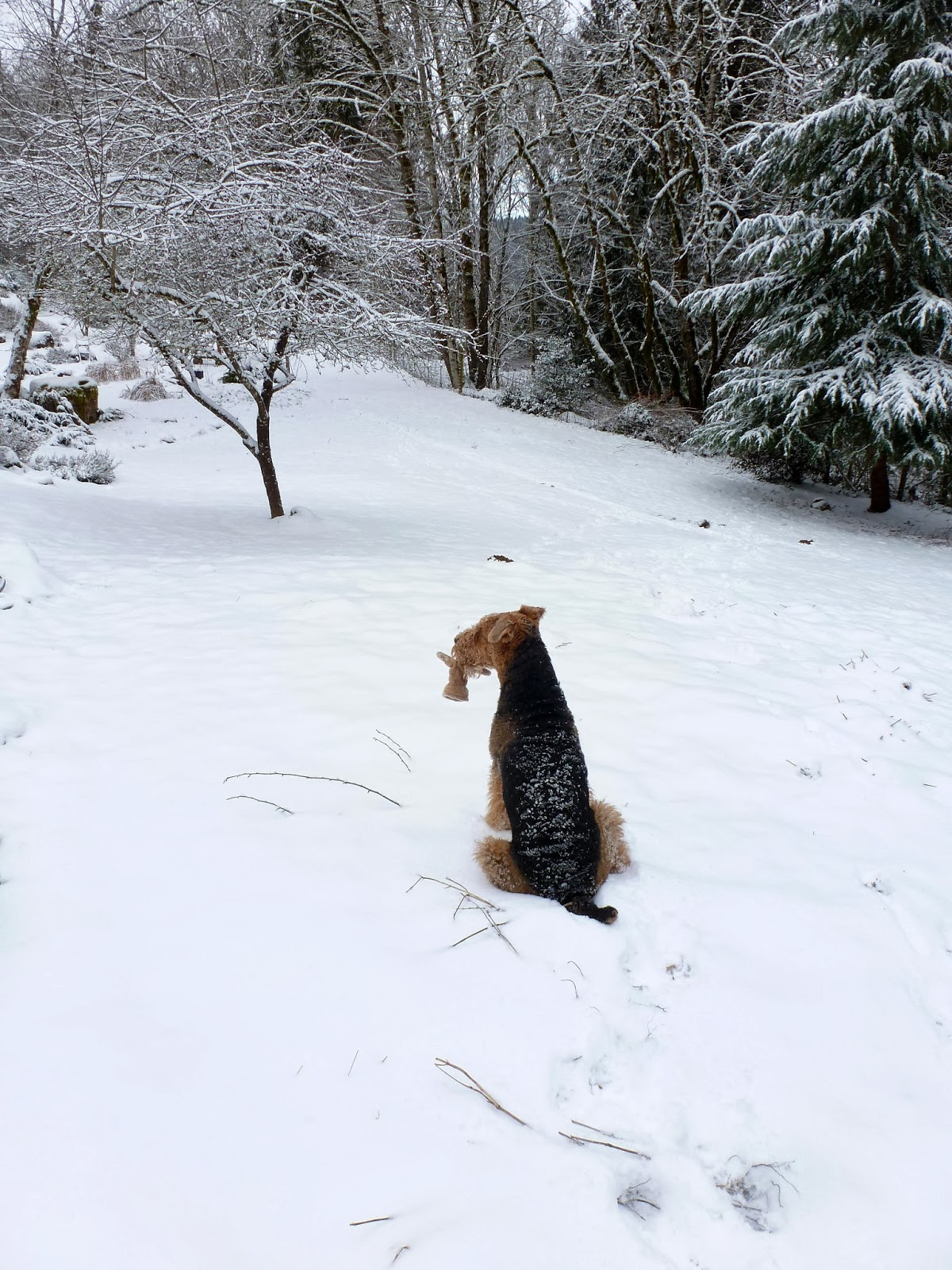 gardening with wyatt snowy gloves snowy dogs snowy bbq