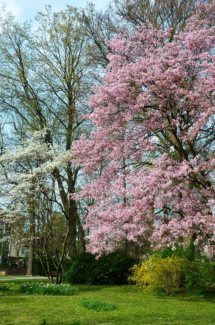 Весна в Германии, фото Олга Граф