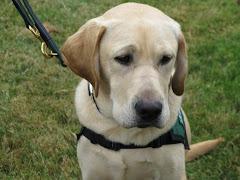 Puppy #12 Jethro (starter puppy) (GALLERY/BOSWORTH)