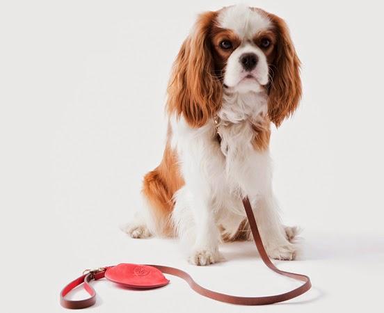 accesorios para mascotas Massimo Dutti perros