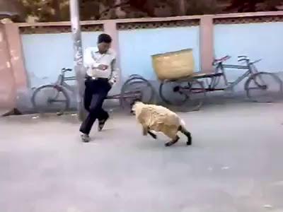 Man Vs Dumba Hahahaha Funny Must Watch & Share