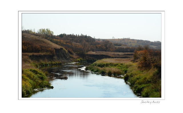 Near Lumsden, Saskatchewan: The creek curves through gold, deep orange/red and green.  © SB Copyright Shelley Banks, all rights reserved.