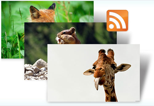 Fauna Dynamic theme