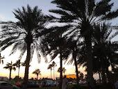 Palmu puita, ei täällä ole muita