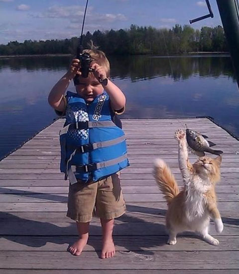 fishing-cat