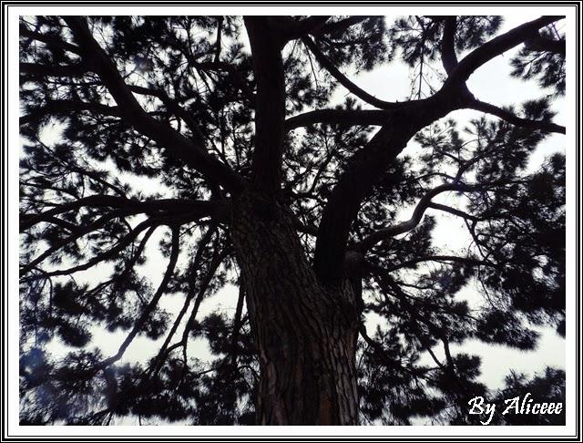 arbore-perfect
