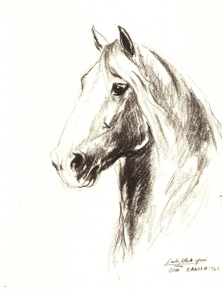 PZ C: caballos