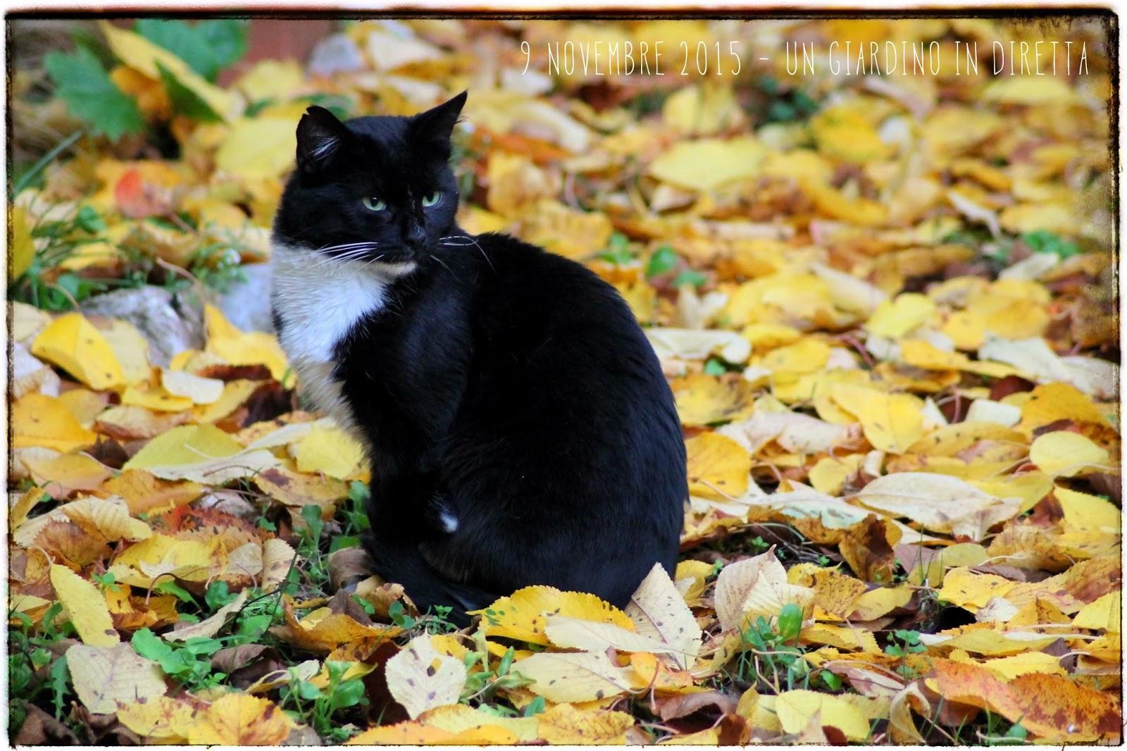 Lavori in giardino di novembre con gatto un giardino in - Lavori in giardino ...