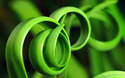 Green hoops free download desktop wallpaper