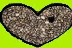 la chia es una semilla util para poder bajar de peso, conoce como se consume y donde la puedes encontrar.