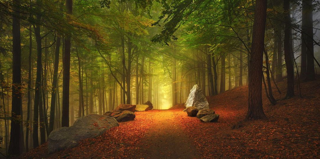 Fotos de paisajes boscosos 90