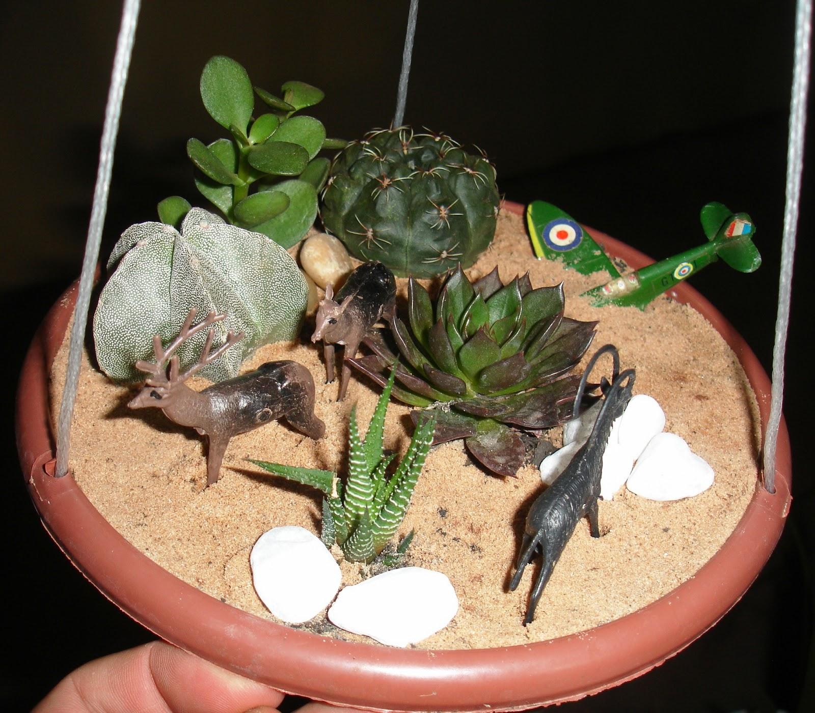 Inovando com Cactos e Suculentas Mini Jardim Suspenso de Cactos e