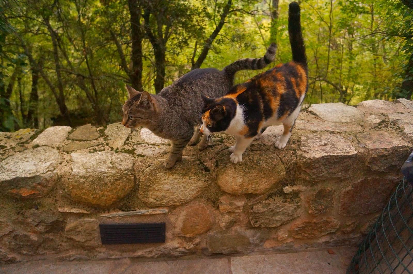 Кошки-в-Греции