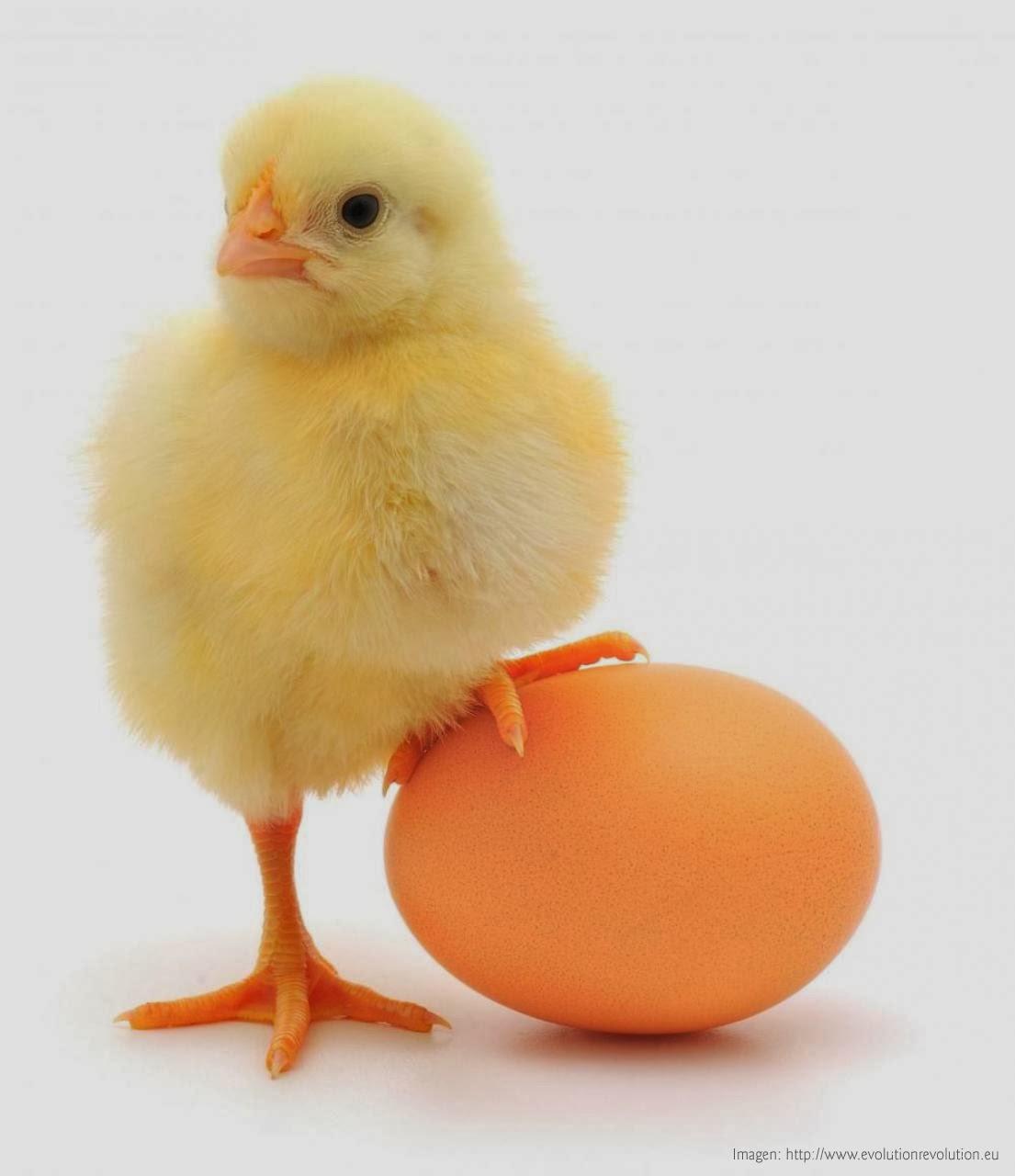 http://le-cru-et-le-cuit.blogspot.com.es/_remplazar los huevos
