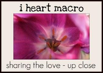 I Heart Macro