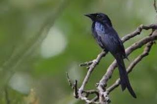 Berbagai Jenis Perbedaan Antara Jantan Dan Betina Pada Burung