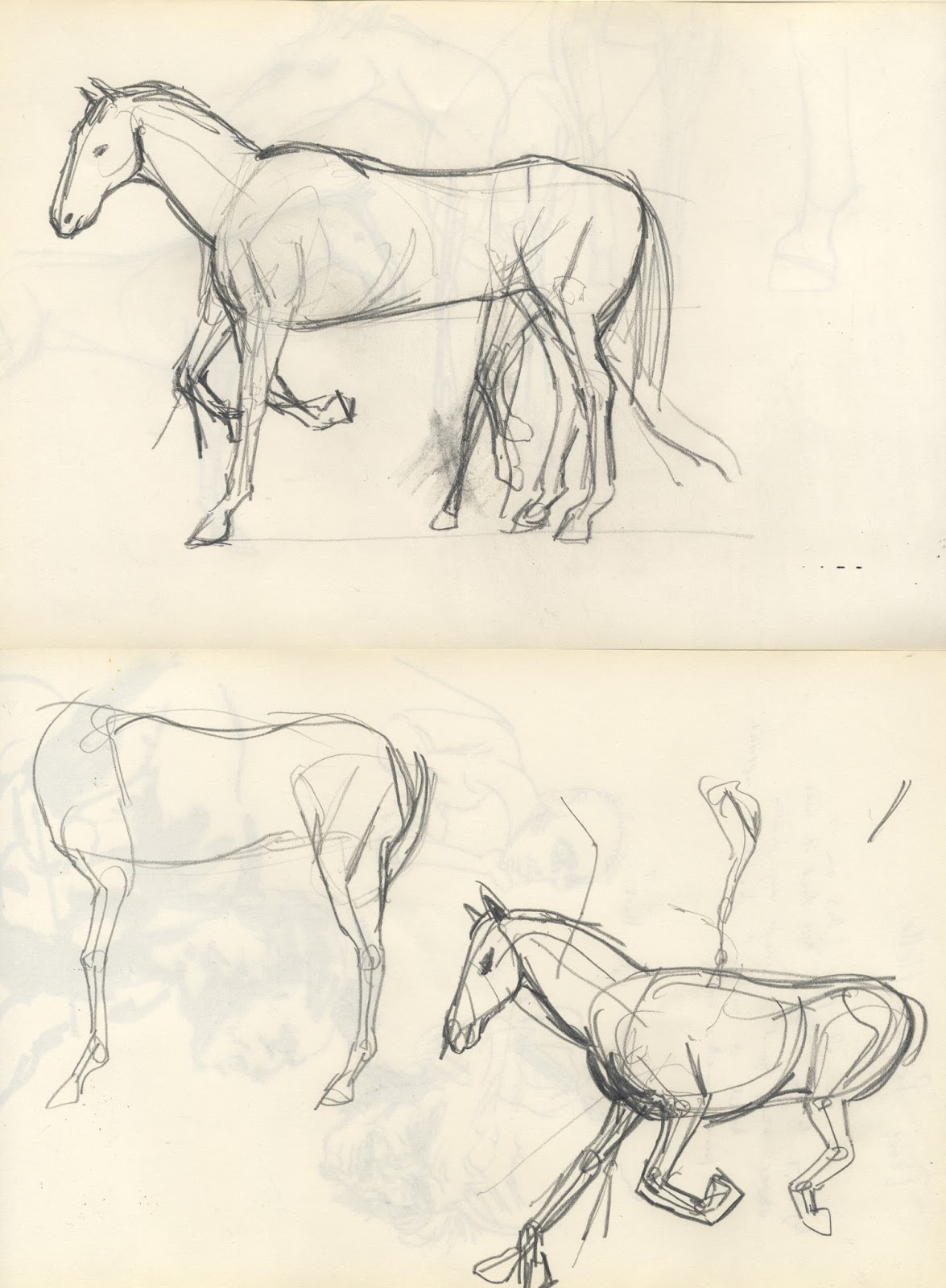 Skinny Horse Drawing And Horse Drawing Books to