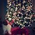 Fotografias retratam a beleza e o encanto do clima de Natal