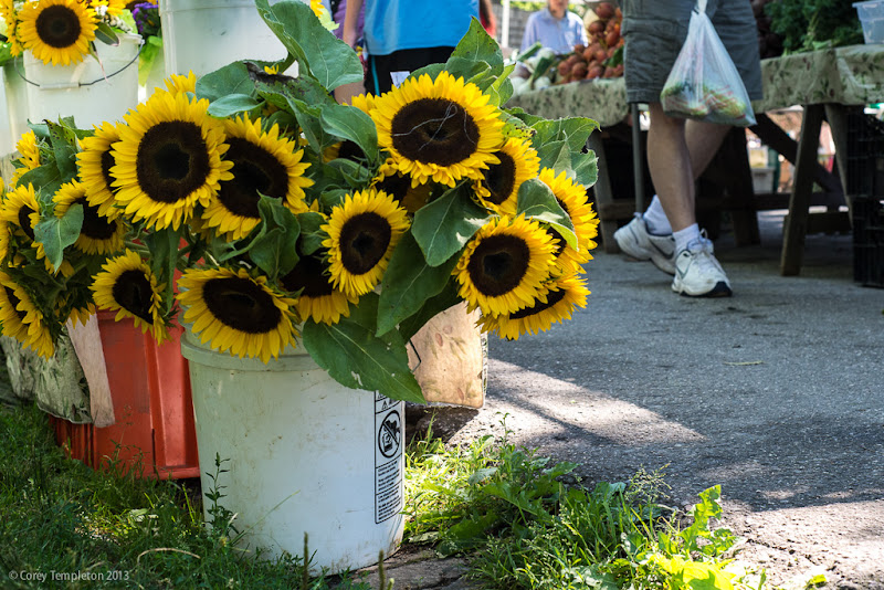 At the Portland Maine Summer Farmers Market in Deering Oaks Park. Photo by Corey Templeton.