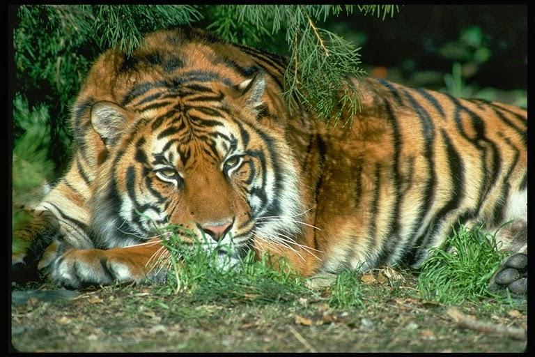 Картинки з природою тваринами