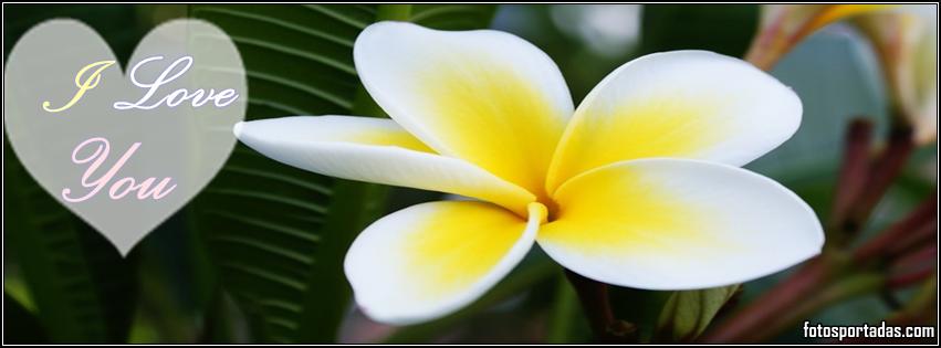 Flores blancas con frases de amor para portadas de facebook ...
