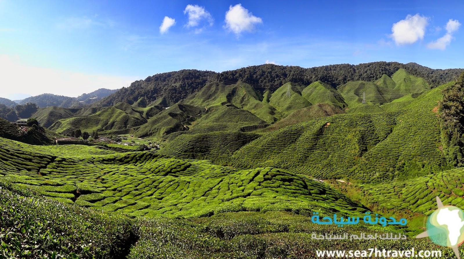 مرتفعات جبال كاميرون في ماليزيا