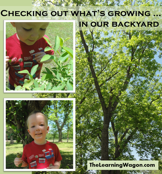 http://rvclassroom.blogspot.com/2014/05/checking-out-what-growing-in-our.html