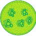 Biologi - Contoh Laporan praktikum jaringan tumbuhan