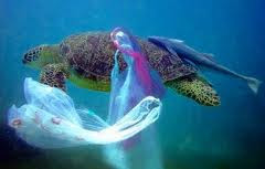 problema del plastico