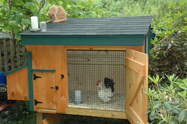 Chicken coop designs a small chicken coop Small chic house plans