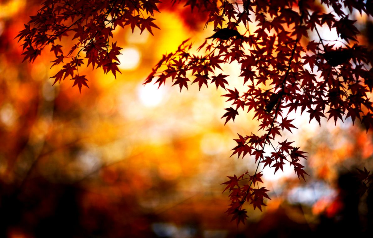 autumn background tumblr   wallpapers gallery