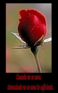 Botón de rosa roja, Tarjetita para facebook,
