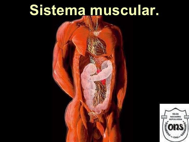Fisiologia Humana : Sitema Muscular