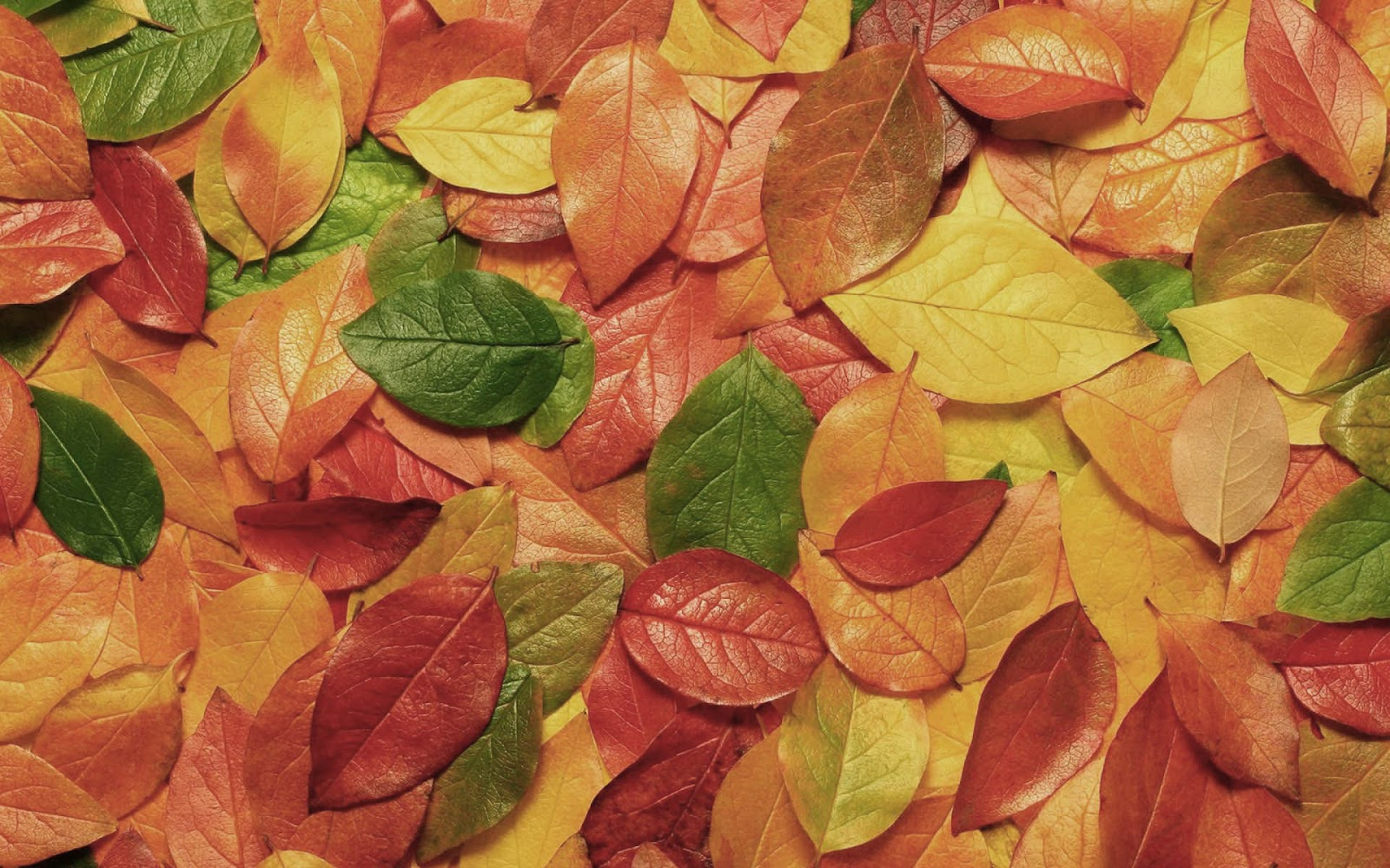 Autumn Leaves All Colors Barbara Desktop