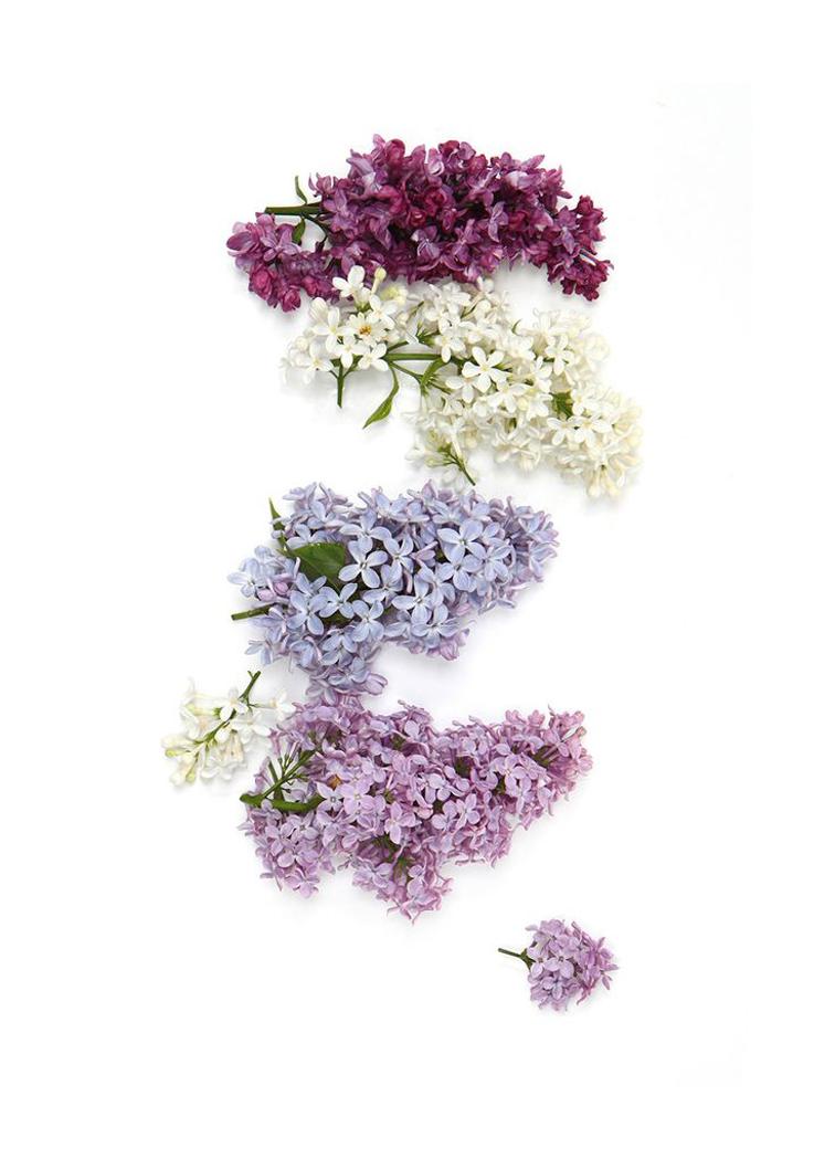Pretty posies, lavender, pastels, flowers