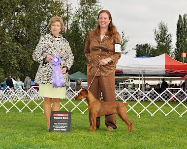 AKC Champion Immer Treu Midnight Dash of Cinnamon