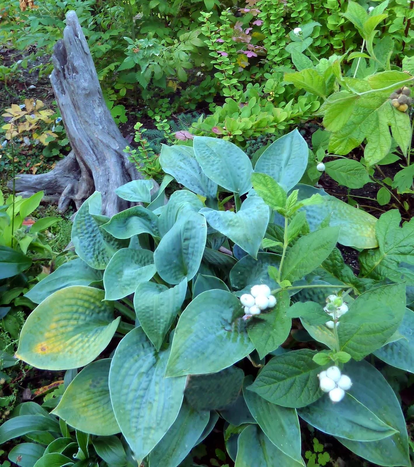 Tankar om och från min trädgård.: i owes trädgård.