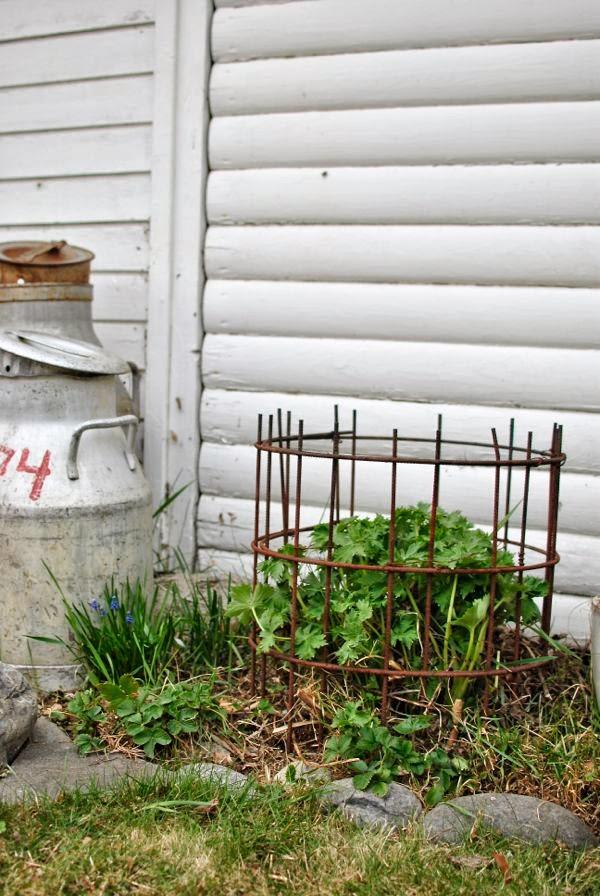 växtstöd armeringsmatta riddarsporre mjölktunna