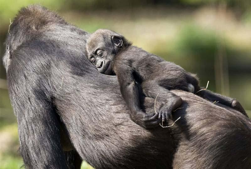 fotos d animales salvajes - Fotos Bestiales, tocar tigre, Alquiler de Animales para cine