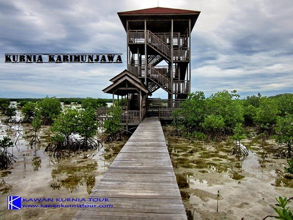 gardu pandang mangrove