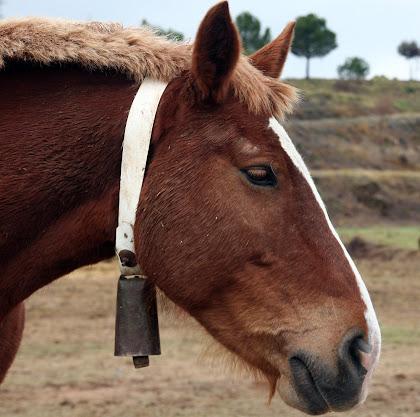 Cavall al voltant de Cal Torres. Autor: Carlos Albacete