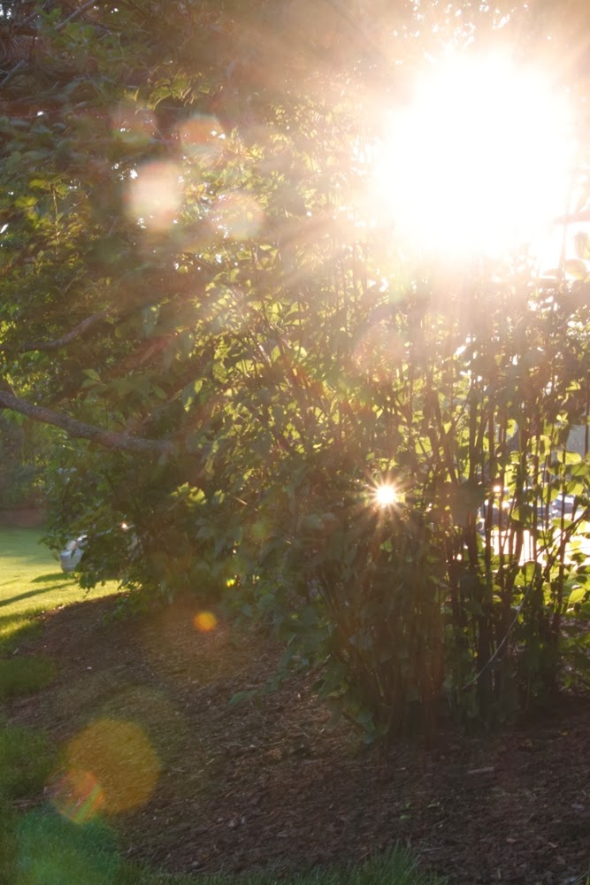 How to Use Lens Flare to Your Advantage | Boost Your Photography