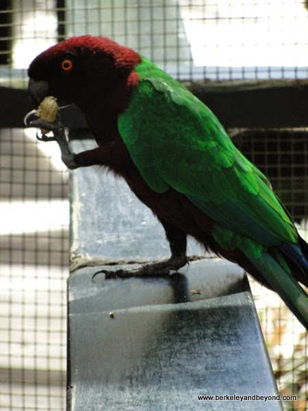 parrot at Kula Eco Park in Fiji